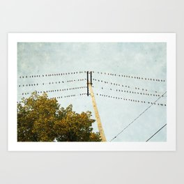 Birds on Wires Art Print