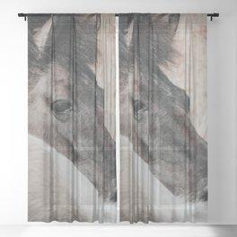Konik Horse Photo | Animal Wildlife Photography | Wild Konik Horse  Sheer Curtain