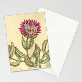 Mesembryanthemum pillansii/Erepsia pillansii, Aizoaceae Stationery Cards