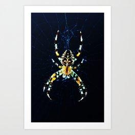 European Garden Spider Art Print