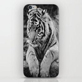 Amur Tiger Cub iPhone Skin