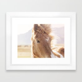 Golden Horse Photograph Framed Art Print