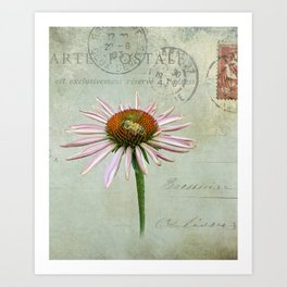 coneflower & bee postale Art Print