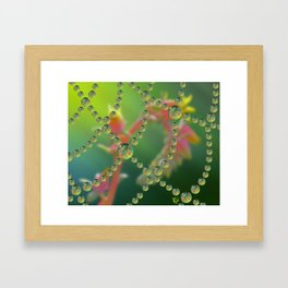 Echevaria Web Drops Framed Art Print
