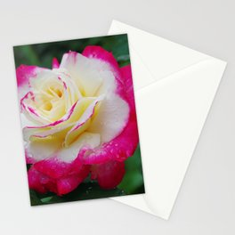 Double Delight Rose - Red and cream beauty Stationery Cards