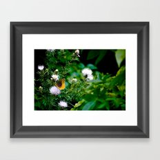 Old Style Butterfly  Framed Art Print