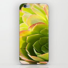 BEAUTIFUL SUCCULENT iPhone Skin