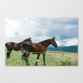 Horses in Tatras Canvas Print