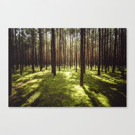 FOREST - Landscape and Nature Photography Canvas Print