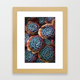 Colorful Cactus Rose Framed Art Print
