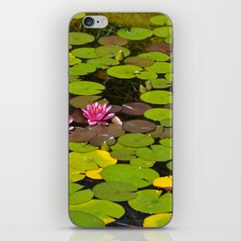 Pink waterlilies iPhone Skin