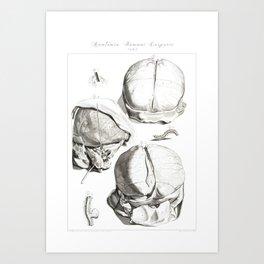 Human Anatomy Art Print HEAD BRAIN SKULL Vintage Anatomy, doctor medical art, Antique Book Plate, Me Art Print
