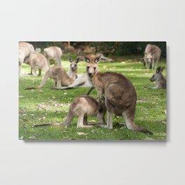 Mother Eastern Grey Kangaroo and Joey Metal Print