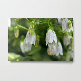 Lily of the Valley Flowers - Original Botanical Nature Photography - Flora Art  Metal Print