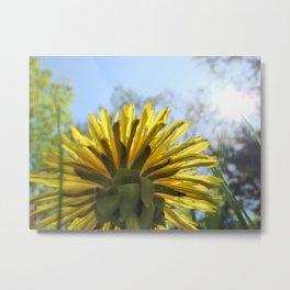 Summer Flower and Blue Sky Metal Print