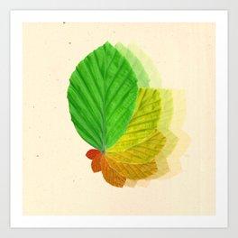 Fagus sylvatica  Art Print