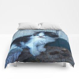 Black + White Kitten Comforters
