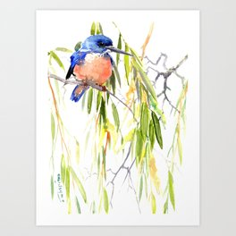 KIngfisher and Weeping Willow Art Print