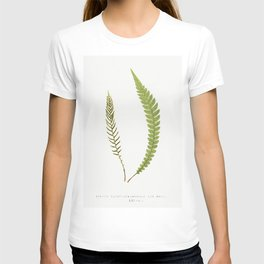 Lomabia Lanceolata from Ferns British and Exotic (1856-1860) by Edward Joseph Lowe T-shirt
