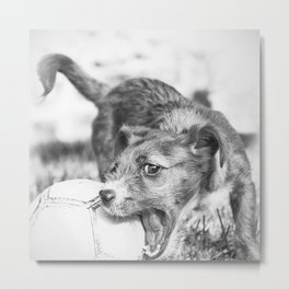 Little puppy playing with the ball Metal Print