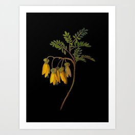 Sophora Tetraptera Mary Delany Floral Paper Collage Delicate Vintage Flowers Art Print