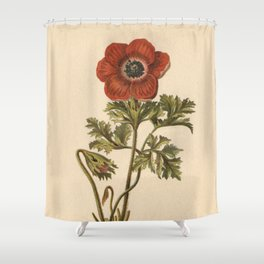 1800s Encyclopedia Lithograph of Anemone Flower Shower Curtain