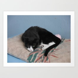 Sad Black & White Tuxedo Cat Art Print