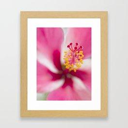 Tropical flower art (Pink hibiscus) Framed Art Print