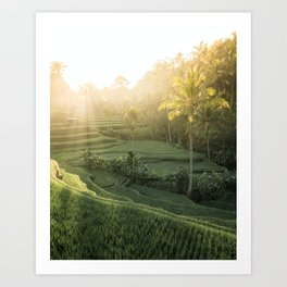 Morning Sun in Bali Art Print