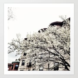 Beacon Hill in the Spring Art Print