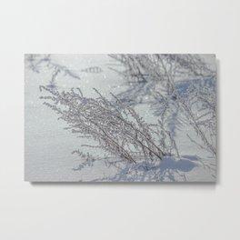 Winter grass Metal Print
