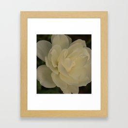 White Rose side Framed Art Print