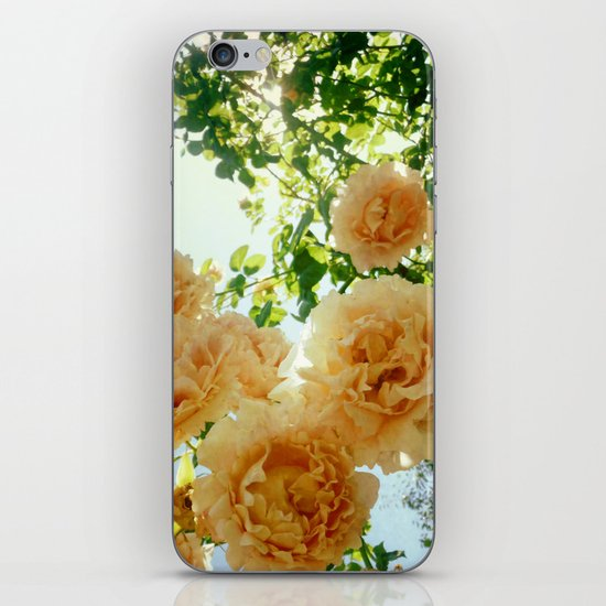 Summery iPhone & iPod Skin