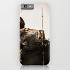 How Now, Brown Cow? iPhone 6s Slim Case