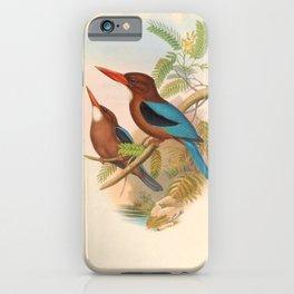 Halcyon Cularis Kingfisher Vintage Birds iPhone Case