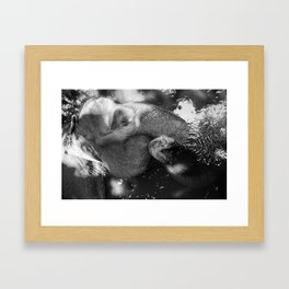 Chillin' Elephant Framed Art Print