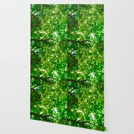 sun behind leaf Wallpaper