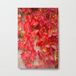 Vitaceae ivy wall abstract Metal Print