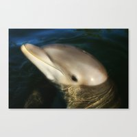 dolphins Canvas Prints featuring Dolphins by Melisa Caprio