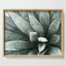Botanical Succulents // Dusty Blue Green Desert Cactus High Quality Photograph Serving Tray