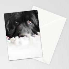 Rug Dog Stationery Cards