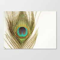 peacock feather Canvas Prints featuring Peacock Feather by Kimberly Blok