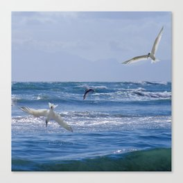Terns diving into the ocean Canvas Print