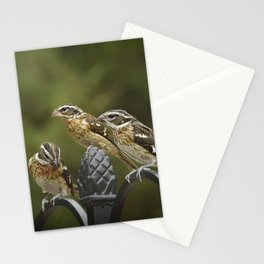 Grosbeaks Three Stationery Cards
