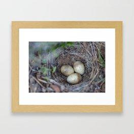 Horned lark nest and eggs - Yellowstone National Park Framed Art Print