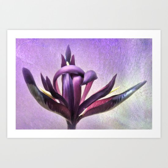 Wild Purple Iris Art Print