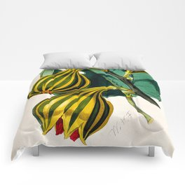 Fig plant, vintage illustration Comforters