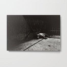 Let Sleeping Dogs Lie Metal Print