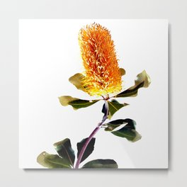 Beautiful Australian Banksia Flower Metal Print