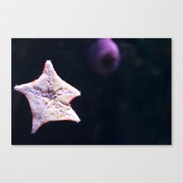 The Underside of a Starfish Canvas Print